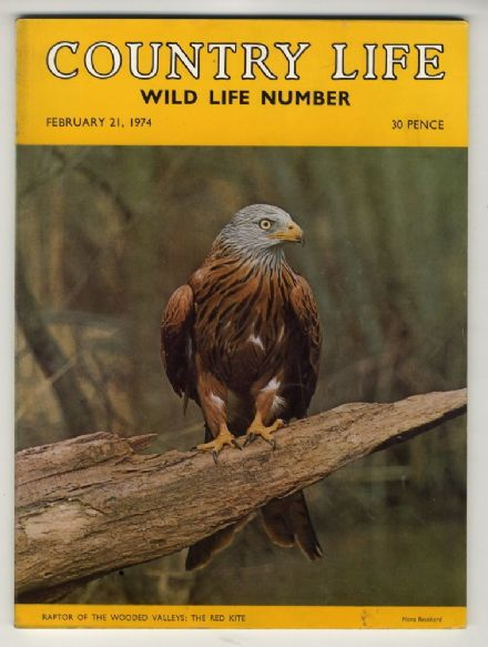 1974 COUNTRY LIFE MAGAZINE 21 February NEILSON Welsh Red Kite CRUFTS Bison